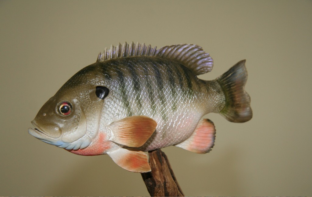 Bluegill-category-image