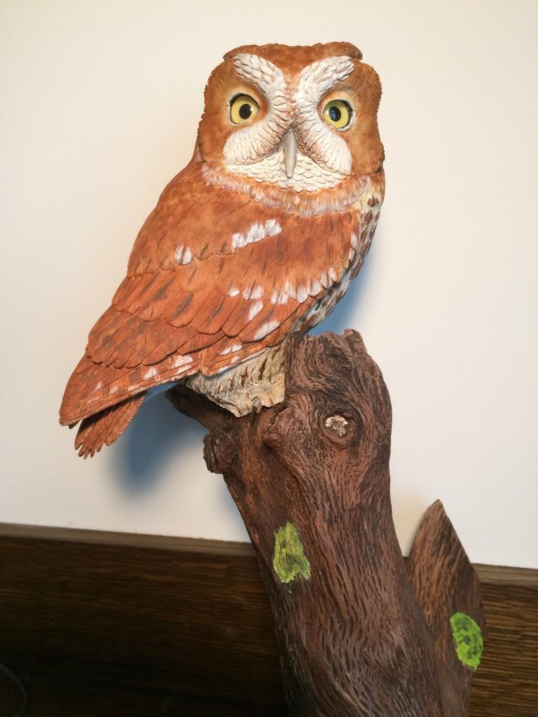 Western-Screech-Owl-2